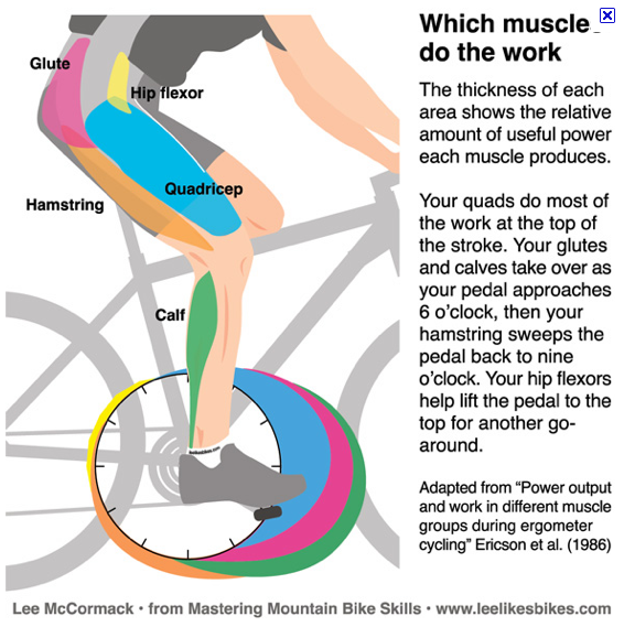 Spinning To Build Leg Muscle