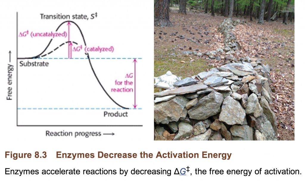 Gibbs free energy and catalysis compared to a wall.