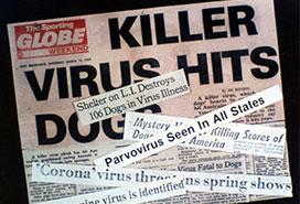 Canine parvovirus outbreak article in paper
