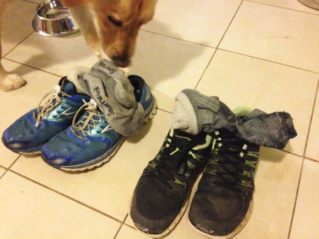 FitOldDog's shoes and socks